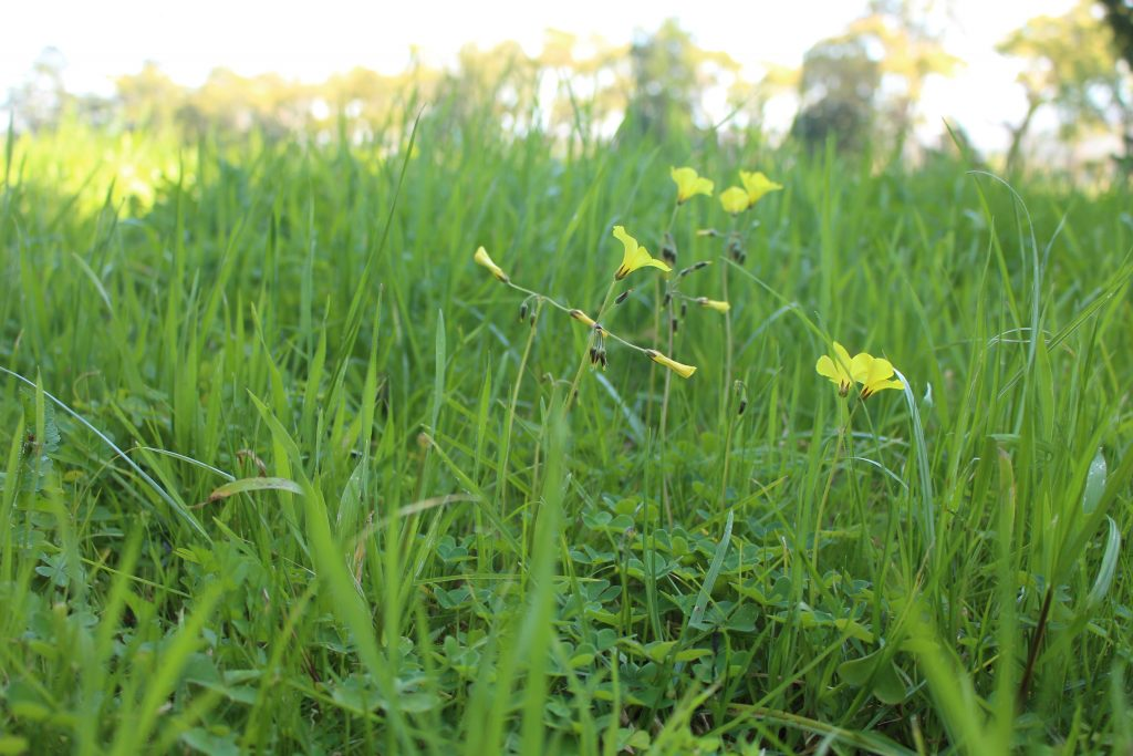 grass and yellow
